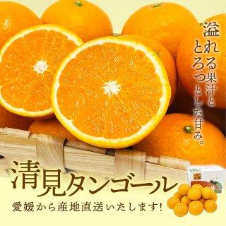 清見タンゴール【優品】2L~M 3kg