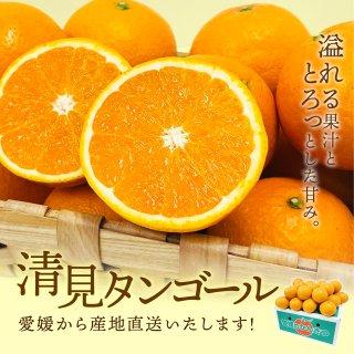 清見タンゴール【優品】2L~M 5kg