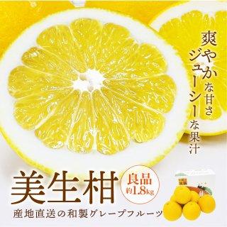 美生柑【優品】約2kg 6玉