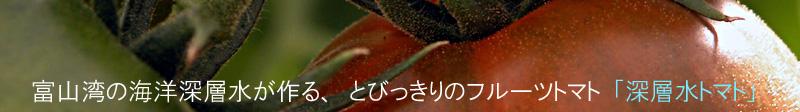 深層水トマトと桃の(有)ひかりファーム