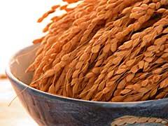 我が家のコシヒカリ玄米5�袋