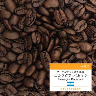 ニカラグア パカマラ ラ・ベンディシオン農園 中やや深煎り コーヒー豆 100g