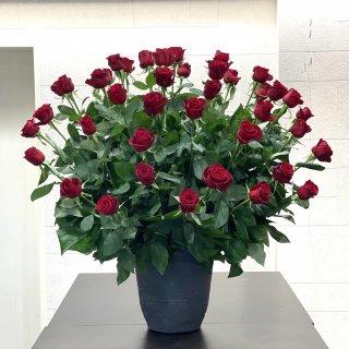 赤バラ50本のアレンジメント