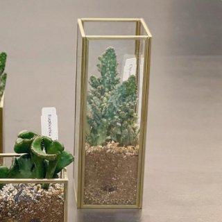 真鍮ガラスベース 多肉植物の寄せ植え 【縦長】(宅配でお届け)
