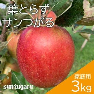 青森葉とらずりんご「サンつがる」家庭用3kg(約8〜12個)※9月中旬頃より発送予定