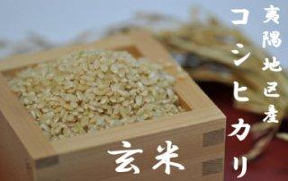 令和2年夷隅産コシヒカリ      玄米10kg