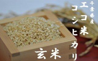令和2年エコ米コシヒカリ      玄米 10kg