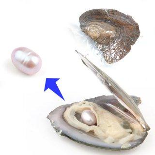 【1粒売り】牡蠣からパールを採掘しよう! パープル pea_oys_01_p