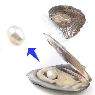 【1粒売り】牡蠣からパールを採掘しよう! ホワイト pea_oys_01_w