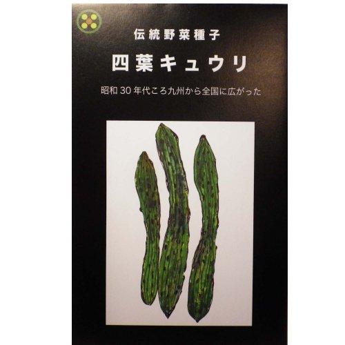 浜名農園 / 伝統野菜種子 四葉キュウリ(スーヨーキュウリ)