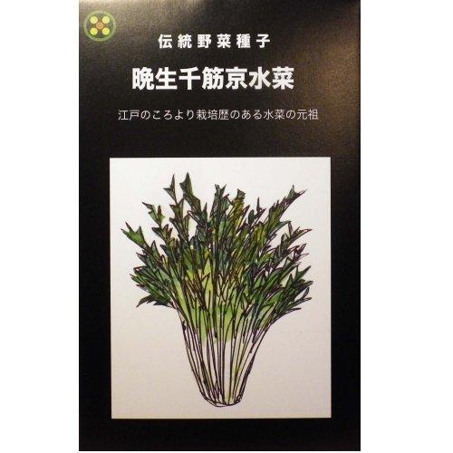 浜名農園 / 伝統野菜種子 晩生千筋京水菜