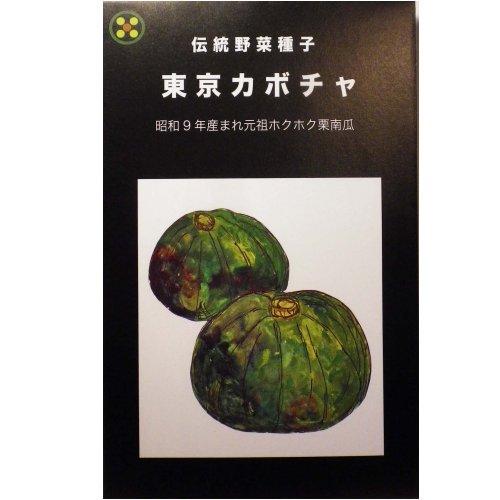 浜名農園 / 伝統野菜種子 東京カボチャ(芳香青皮栗カボチャ)