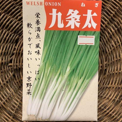 浜名農園 / 伝統野菜種子 九条太ねぎ