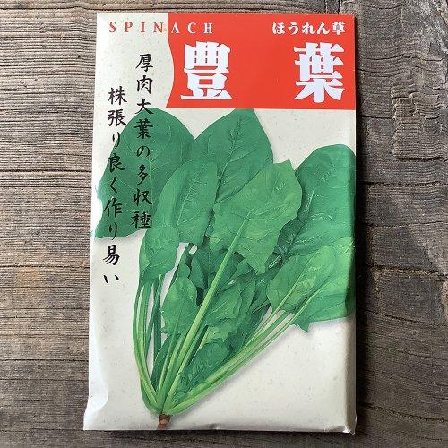 浜名農園 / 伝統野菜種子 豊葉ほうれん草