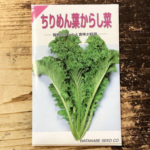 浜名農園 / 伝統野菜種子 ちりめん葉からし菜
