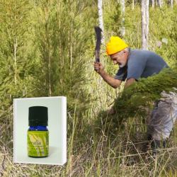 豪州奥地に生育する最古のティーツリー原種を母木に抽出したブッシュオイル 希少 野生ティーツリー精油 5ml  (メール便可) NASAA認証オーガニック2019年6月産