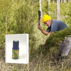 豪州奥地に生育する最古のティーツリー原種を母木に抽出したブッシュオイル 希少 野生ティーツリー精油 10ml  (メール便可)NASAA認証オーガニック  2019年6月産