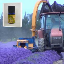 一大プロジェクトから生まれた徹底管理された高品質で安全性の高い 無農薬ニュージーランド真正ラベンダー精油 5ml (メール便可)2019年産