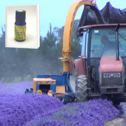 2019年産 一大プロジェクト 徹底管理された高品質で安全性の高い 無農薬ニュージーランド真正ラベンダー精油 10ml (メール便可)