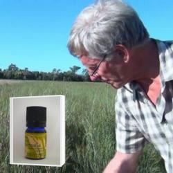 優しい甘さのある爽やかなレモン系の香り  アロマ香水に 無農薬ハニーマートル精油5ml (メール便可)2019年11月産