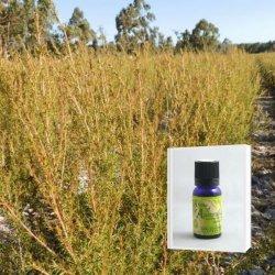 爽やかさと甘さの香り成分の調和に魅せられる アロマ香水に 無農薬フラゴニア精油 ( メール便可)2019年12月産  10ml