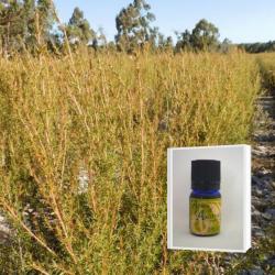 爽やかさと甘さの香り成分の調和に魅せられる アロマ香水に 無農薬フラゴニア精油5ml  ( メール便可)2019年12月産