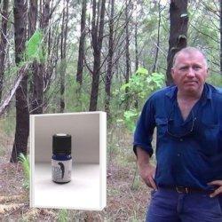 【11月末迄:アロマボール付】アボリジニの伝承 特許取得蒸留法で48時間抽出 (商標:KAKADU BLUE)深みある森の香り 真正ブルーサイプレス精油(メール便可)2019年3月産 5ml