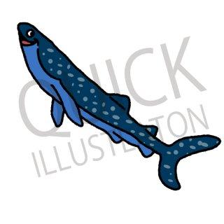 ジンベイザメ イラスト(魚、ジンベイザメ、サメ、鮫、海、哺乳類、動物)
