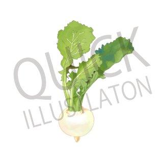 かぶ イラスト(野菜、食べ物、植物、食)