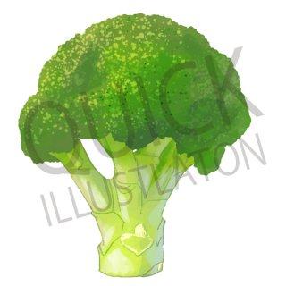ブロッコリー イラスト(野菜、食べ物、植物、食)