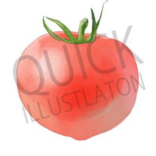 トマト イラスト(野菜、食べ物、植物、食)