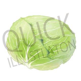 キャベツ イラスト(野菜、食べ物、植物、食)
