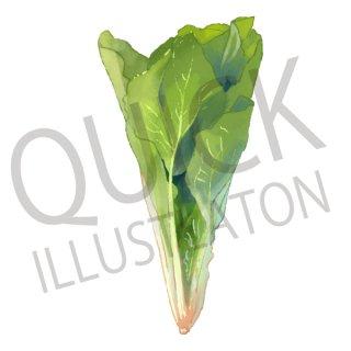 ほうれん草 イラスト(野菜、食べ物、植物、食)
