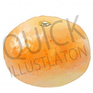 みかん イラスト(果物野、食べ物、植物、食、フルーツ、オレンジ)
