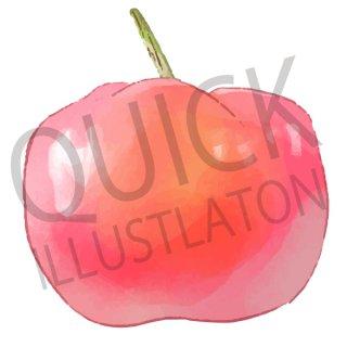 アセロラ イラスト(果物野、食べ物、植物、食、フルーツ)
