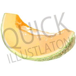 メロン イラスト(果物野、食べ物、植物、食、フルーツ)