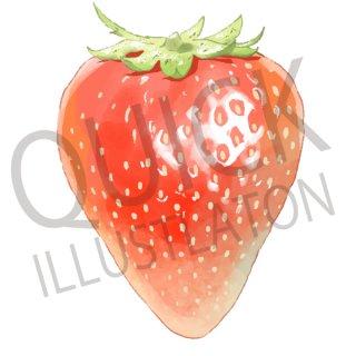いちご イラスト(果物野、食べ物、植物、食、フルーツ、苺、イチゴ)