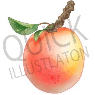 杏 イラスト(食べ物、植物、食、木の実、フルーツ、果物、あんず)