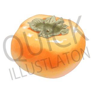 柿 イラスト(食べ物、植物、食、木の実、フルーツ、果物)