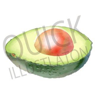 アボカド イラスト(食べ物、植物、食、木の実、野菜)