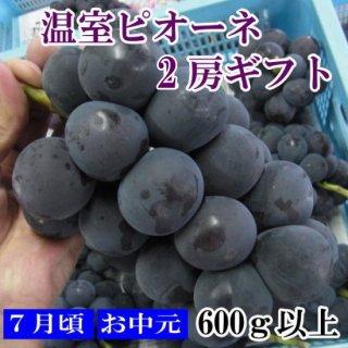 【県知事賞・優秀賞】温室種無しピオーネ 化粧箱2房ギフト