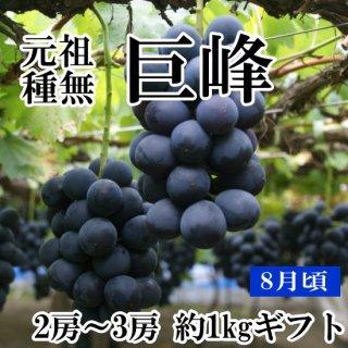 【クール便】元祖葡萄の王様 種無し巨峰(2房)約1Kギフト