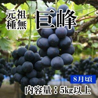 【クール便】元祖葡萄の王様 種無し巨峰(10房〜12房)約5Kギフト