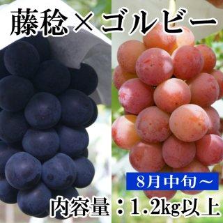 ゴルビーと藤稔1.2Kギフト