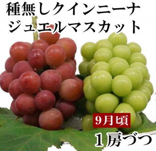 クイーンニーナ・シャインマスカット【各1房ずつ】
