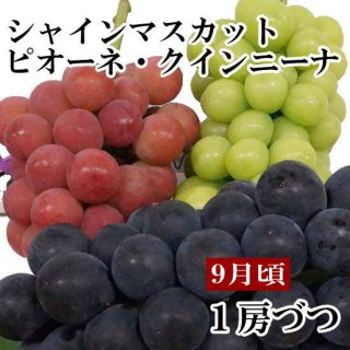 クイーンニーナ・シャインマスカット・ピオーネギフト【1房ずつ】