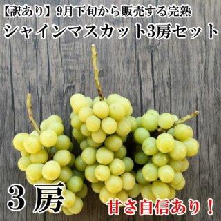 【家庭用】訳ありシャインマスカット3房セット(内容量1.6�以上)