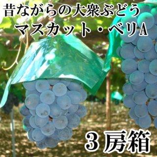 【種あり】マスカットベリA 3房入りギフト