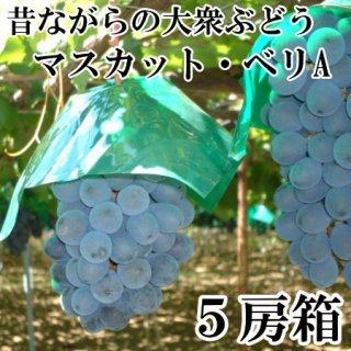 【種あり】マスカットベリA 5房入りギフト
