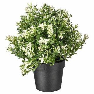 IKEA イケア FEJKA 人工観葉植物 タイム z40375167